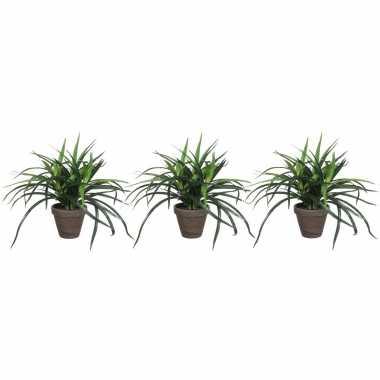 Set van 3x stuks groene dracaena kunstplanten in bruine pot 34 cm